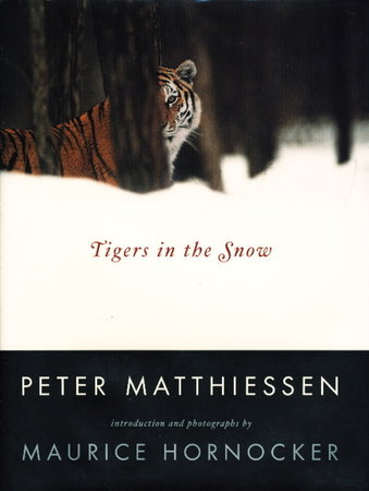 TIGERS IN THE SNOW. by Matthiessen, Peter.